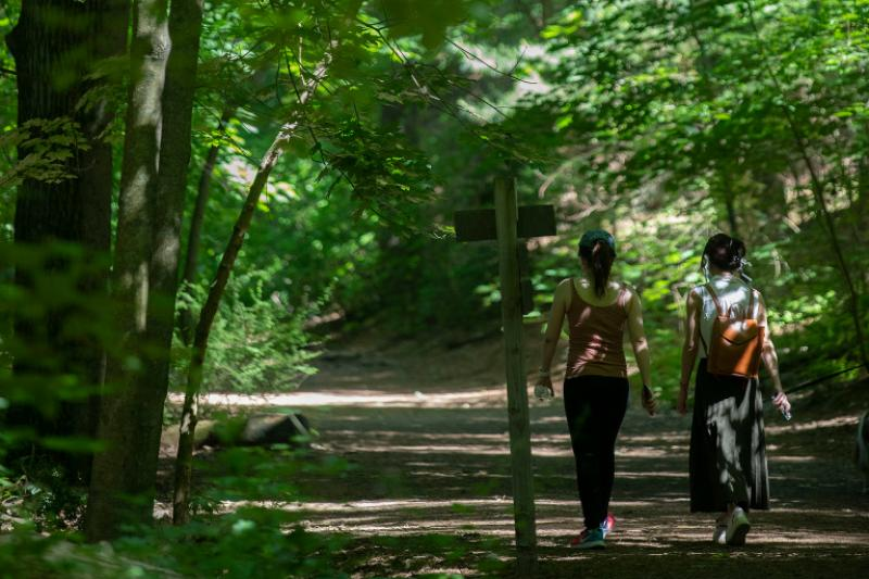Two individuals walking through the forest.