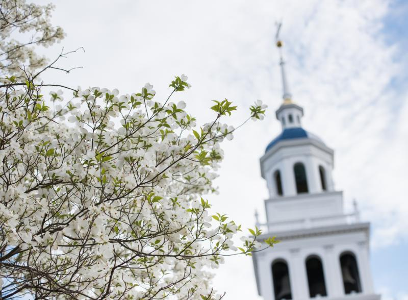 a tree with flowers in front of steeple