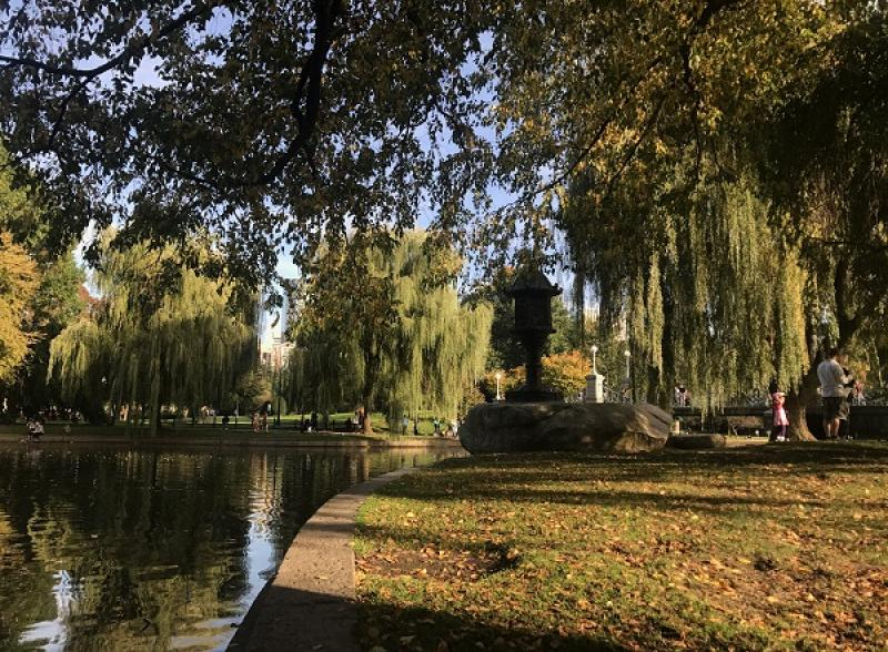 a waterside view of the boston public garden