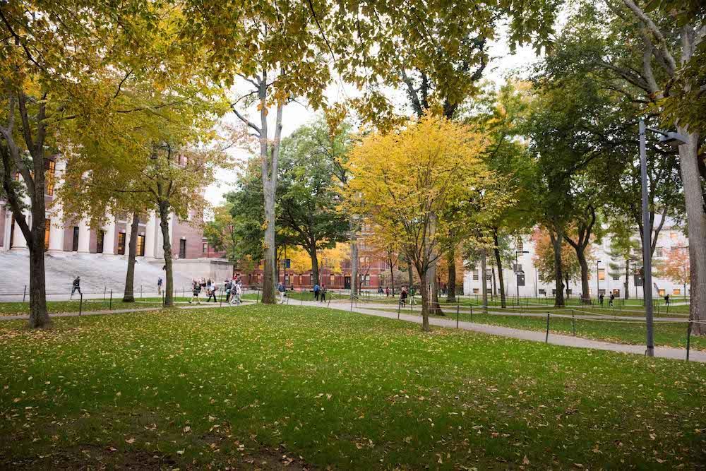 Harvard Yard trees with fall foliage