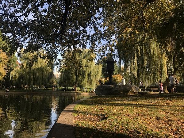 a waterside view of the boston public garden