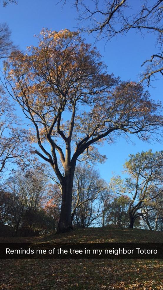 Large tree with autumn leaves in arboretum