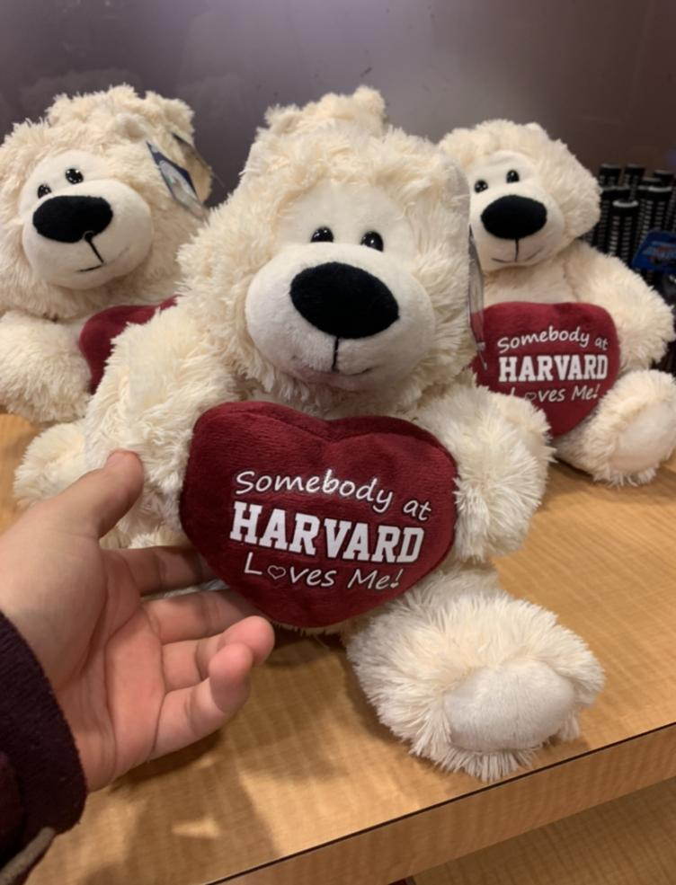 """A white teddy bear with a heart that says """"Somebody at Harvard loves me"""""""