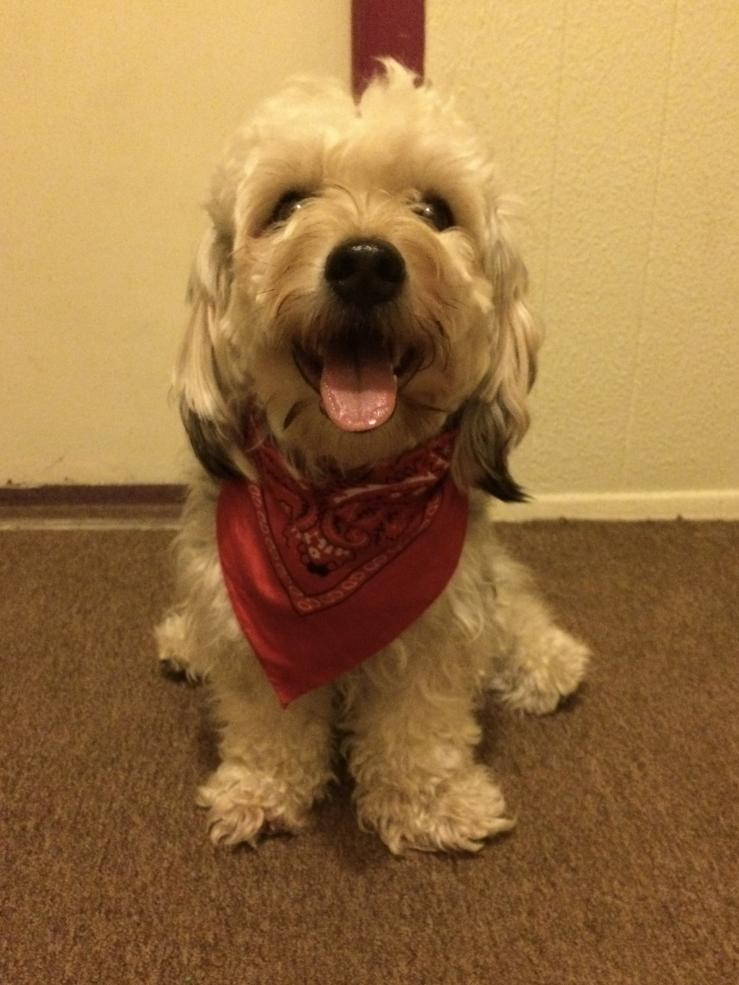 Dog with a red bandana