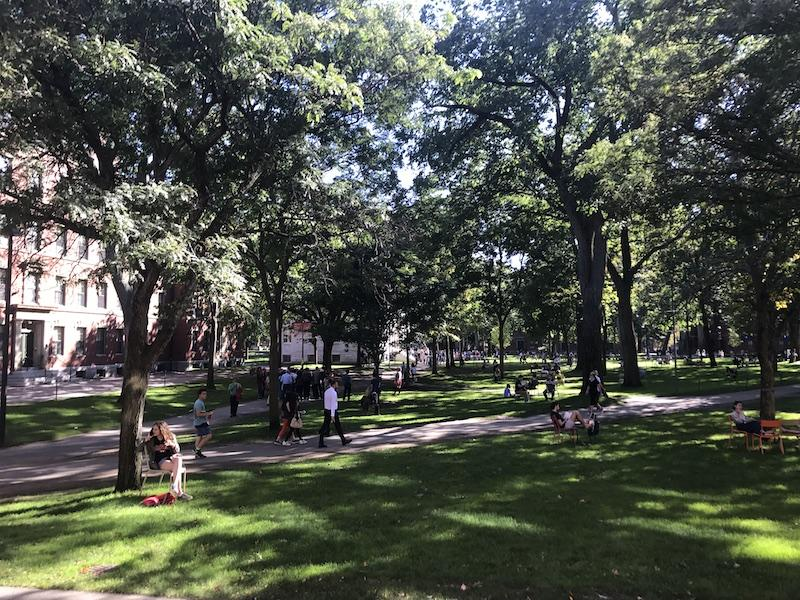 a sunny afternoon in harvard yard, with walking paths, people, and trees