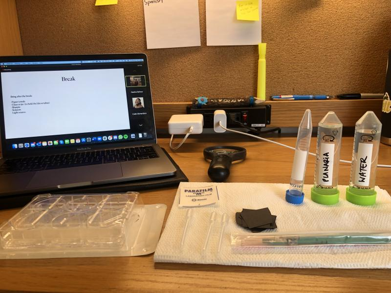 My desk with a laptop and all the materials I need to dissect the worms