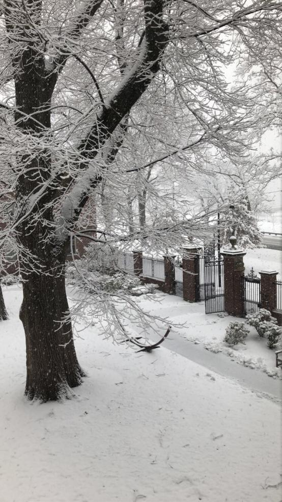 A photo of a winter day with snow covering the ground and trees