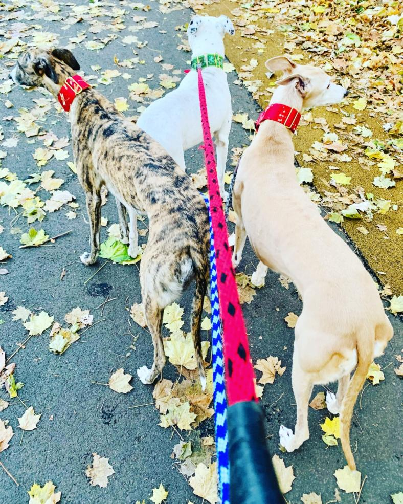 Prineha Narang rescued two greyhounds and one mixed-breed dog who often run with her.