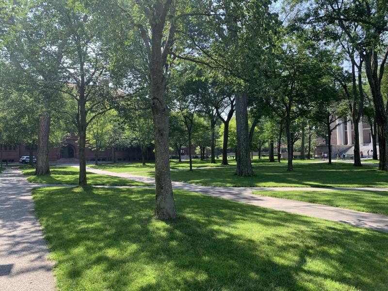 The sun shines through the trees on a sunny summer day in Harvard Yard