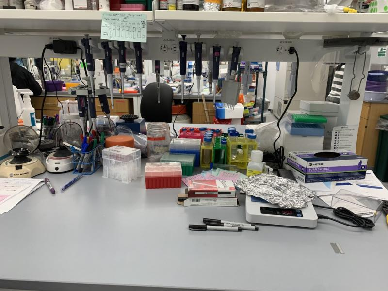 A lab workspace with pipettes, sharpies, and plates on the desk.