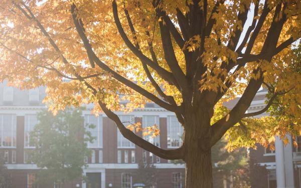 Tree with fall foliage
