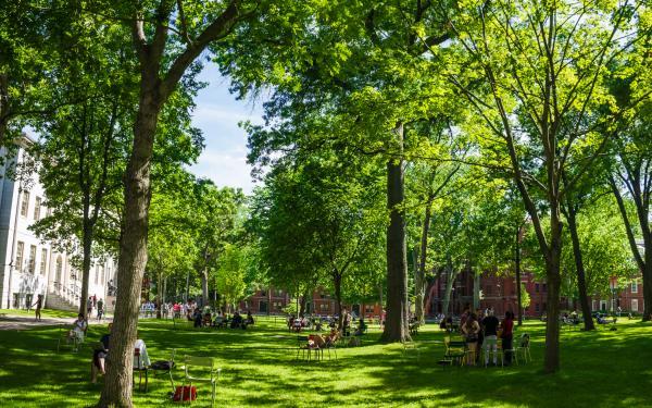 Harvard Yard in the summer