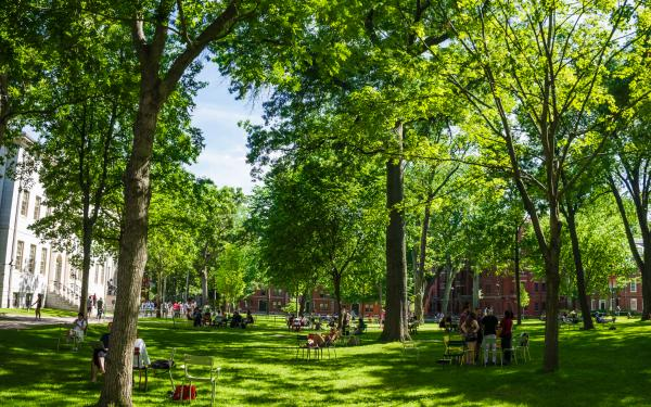 Harvard Yard in the summer