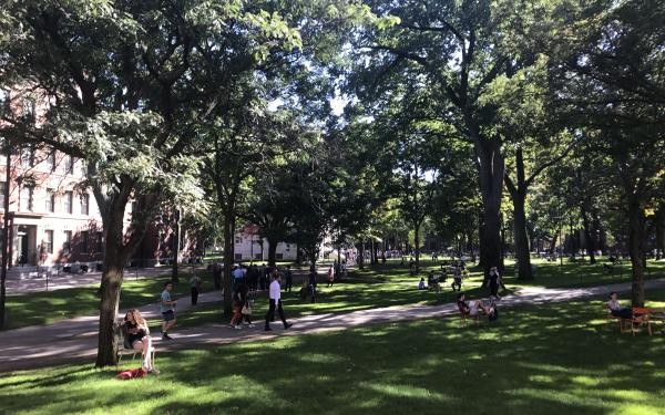 a sunny afternoon in harvard yard, with trees, people, and walking paths